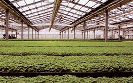 丹麦在华养殖厂输水工程(连云港)
